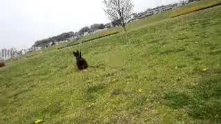 愛犬NEROは短い足で猛ダッシュ(・∀・)