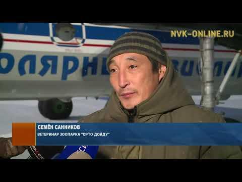 Белый медвежонок, найденный в Среднеколымске, вылетел в Москву