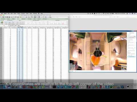 Tutorial For Output File Columns Of SwarmSight Antenna And Proboscis Tracking Software