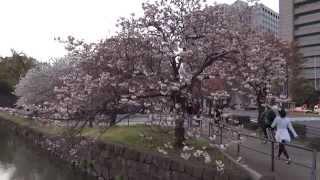 видео Императорский дворец Кокё в Токио
