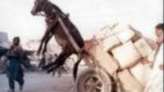 69-boyz---let-me-ride-that-donkey