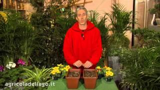 Preparazione del terreno e semina del prato