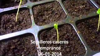 semilleros tempranos caseros