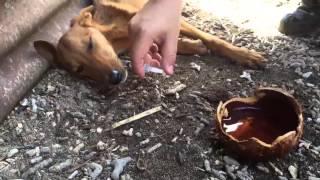 Puppy Pam gered op Vanuatu na cycloon Pam
