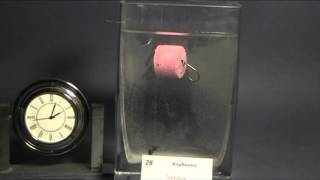 Плавающие бойлы (пелетс) таблетка на сазана