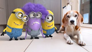💜😆Minion Stuart in REAL LIFE vs My Dogs! 💜😆 Funny Dogs Louie & Marie