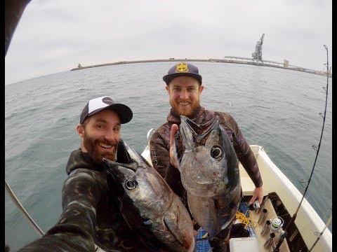 Spearfishing Victoria