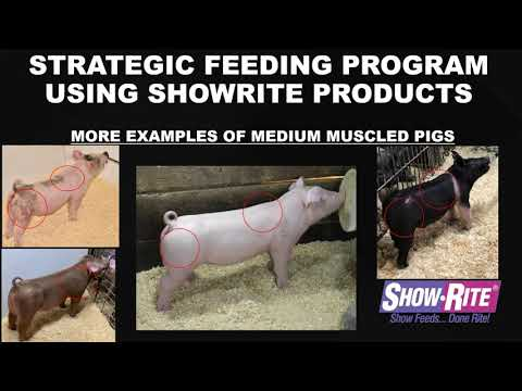 Show-Rite Feed Like a Pro: Swine