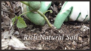 Building Soil Naturally:  Leaf Mulch in the Raised Bed Garden