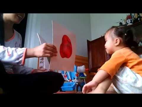 cách dạy con học các loại quả theo phương pháp Glenn Doman
