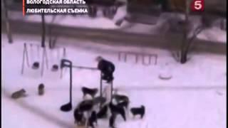 Жесть  Стая собак напала на школьников(Жесть Стая собак напала на школьников., 2014-08-10T15:02:46.000Z)