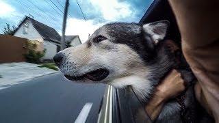 СОБАКИ В САМОЛЁТЕ | КОТЫ В МАШИНЕ | советы ветеринар - кинолог
