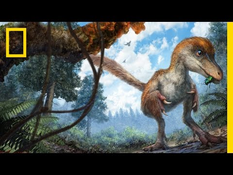 Dinosaur's Feathered Tail Found Remarkably Preserved in Amber | National Geographic