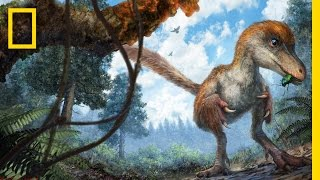 Repeat youtube video Dinosaur's Feathered Tail Found Remarkably Preserved in Amber | National Geographic