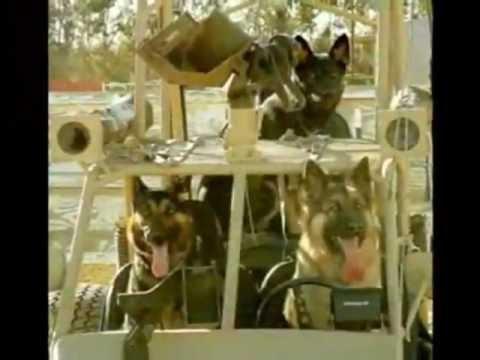 City Newport Beach Dog Park - COUNCIL NBPD FEDERAL TORTURE TRADE, U.S. TOP DOG MURDER PROFITS