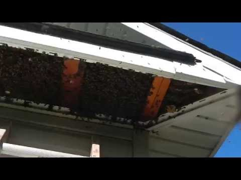 Brownsboro Texas Bee Removal