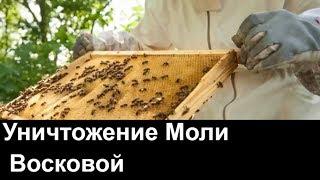 видео Уничтожение моли | в Москве и области ДезЭко