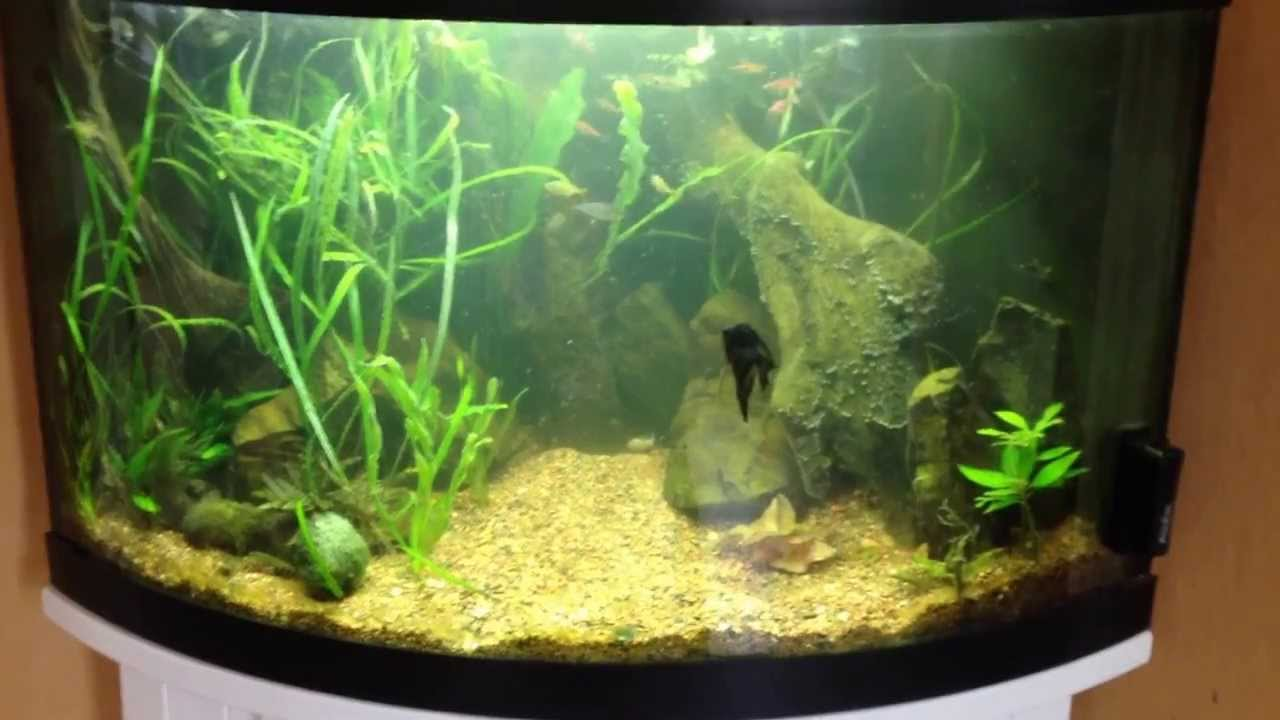 54 gallon corner bowfront youtube for Bow front fish tank