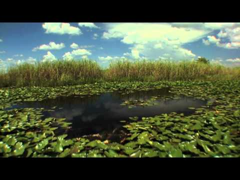 Big Cypress Swamp: Western Everglades - Part 1 of 4