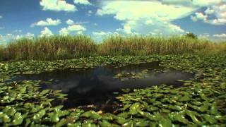 Big Cypress Swamp: Western Everglades - Part 1 of 4