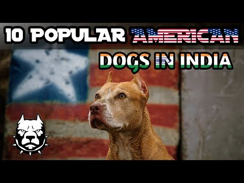 10 Popular American Dogs In India / Popular Dogs / Popular  American dogs in india