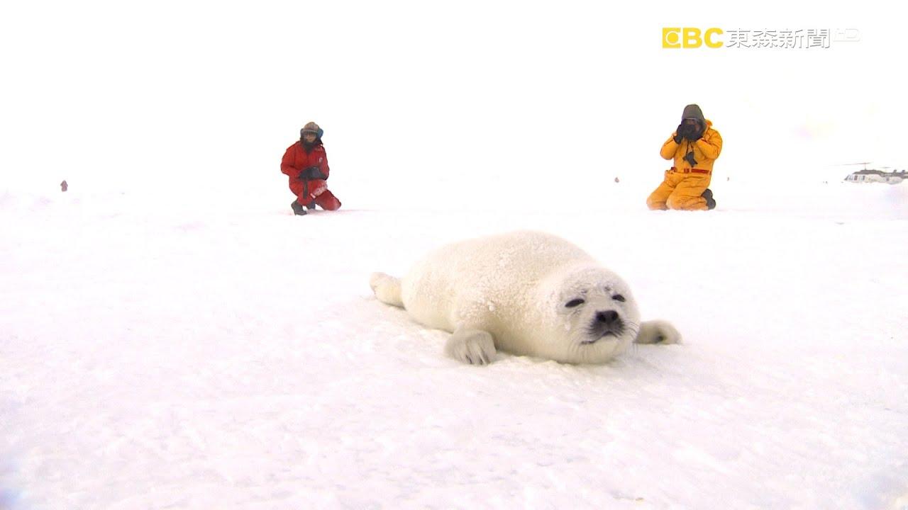 消失的小白仔Part 3《聚焦全世界》精選 聚焦北冰洋|舒夢蘭