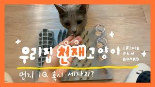 [매일땅콩] 우리집에 천재 고양이가 산다 | 새 장난감…