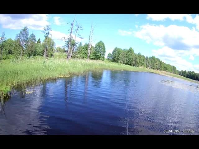 Заболоченное озеро 9