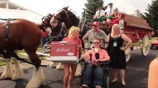 Budweiser Clydesdales Home Delivery In Toledo, Oh