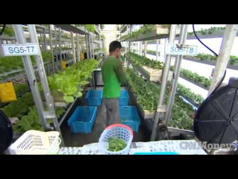 Vertical Farm in Singapore