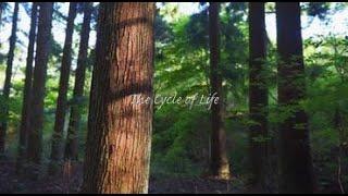 明鏡止水 The Cycle of Life/Performed by 平野陽平