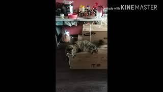 """""""Вальс кота"""" на коробках с кондиционером."""