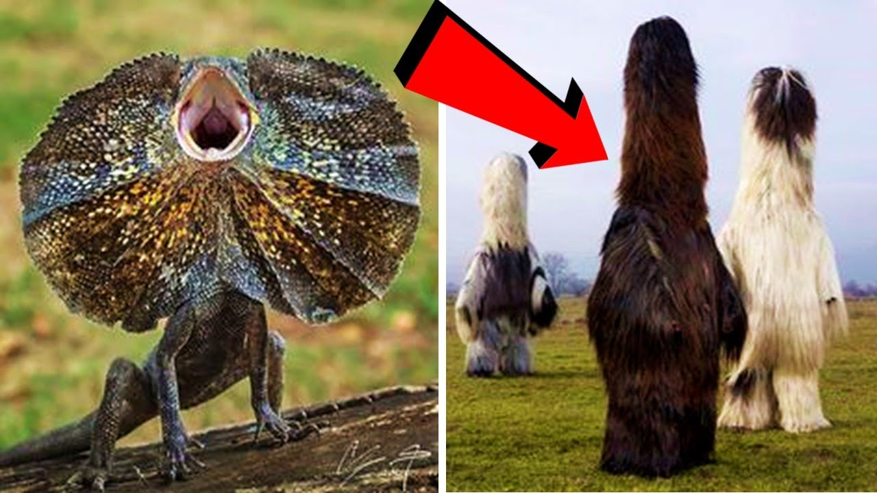 10 ऐसे जानवर जिन्हें देखने के लिए नसीब लगता है | Rare Animal Part 7