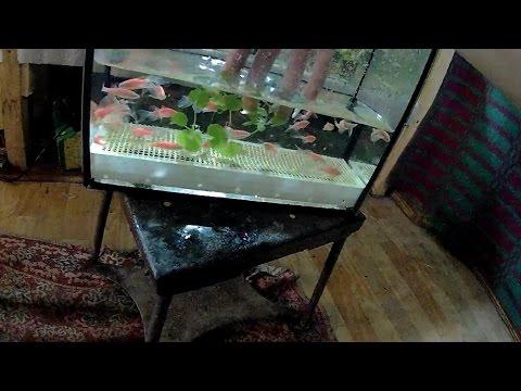 Как размножить рыбок в аквариуме