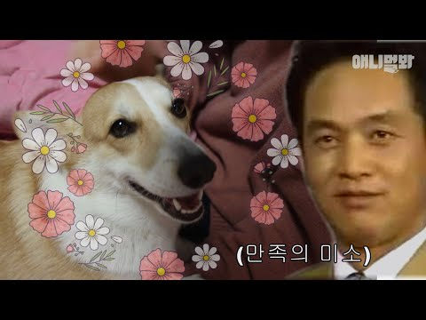 The real reason why genius Welsh Corgi Ari can read people's minds