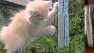 Кошка домашняя. Слайд шоу из фотографий