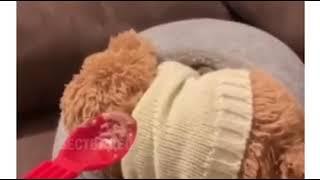 Фото Кот Кошка хочет кушать РЖАКА