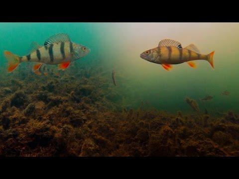 зимняя рыбалка на голавля на жерлицы