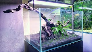 How to Aquascape a Classic Nature Aquarium