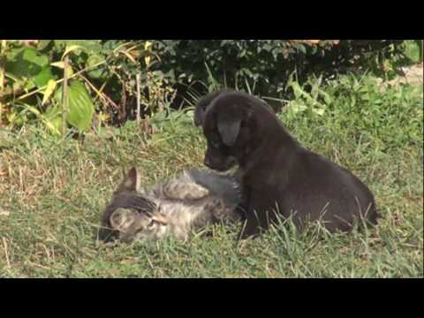 Beautiful dog and cat playing