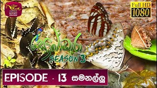 Sobadhara - Sri Lanka Wildlife Documentary | 2019-06-14 | Butterfly in Sri Lanka | සමනලුන්ට Thumbnail