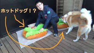 犬用ホットドッグ⁉