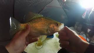 SLAB CRAPPIE and Catfish FIRST ICE-- Ice Fishing Northern Illinois