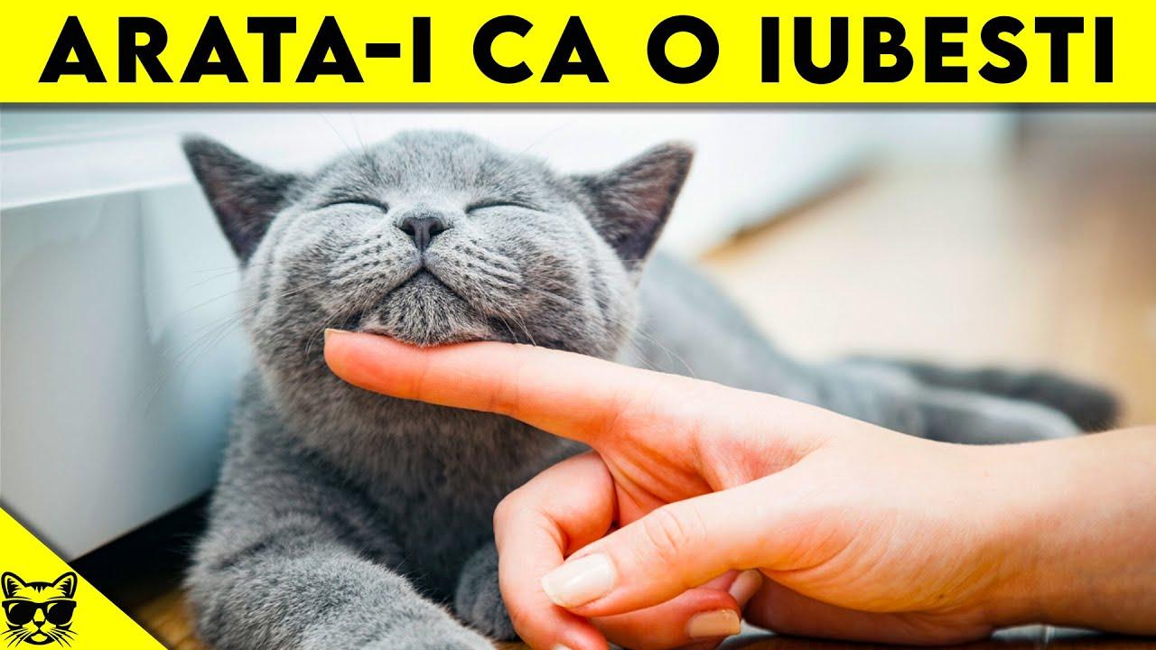 Restabilirea vederii unei pisici, Familie și copii