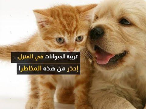صحة الأبدان ليوم الجمعة 06 أفريل 2018 - قناة نسمة