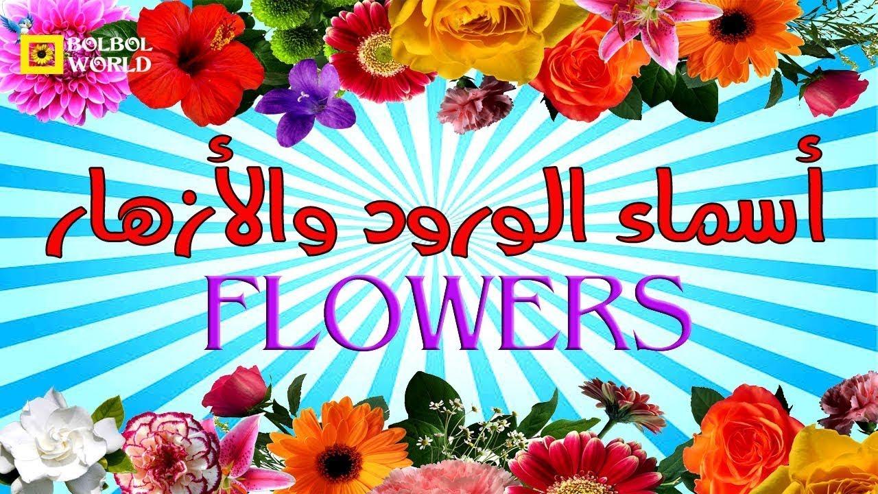 أسماء أجمل الورود و الزهور بالعربية و الانجليزية Name Of The Most Beautiful Flowers Youtube