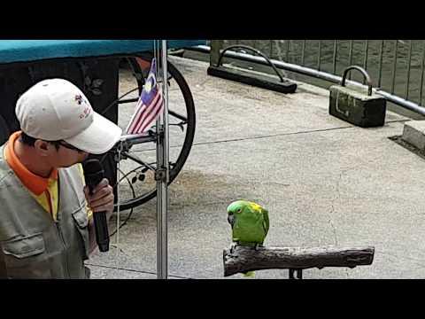 Bird Show - Kuala Lumpur Bird Park. Malaysia