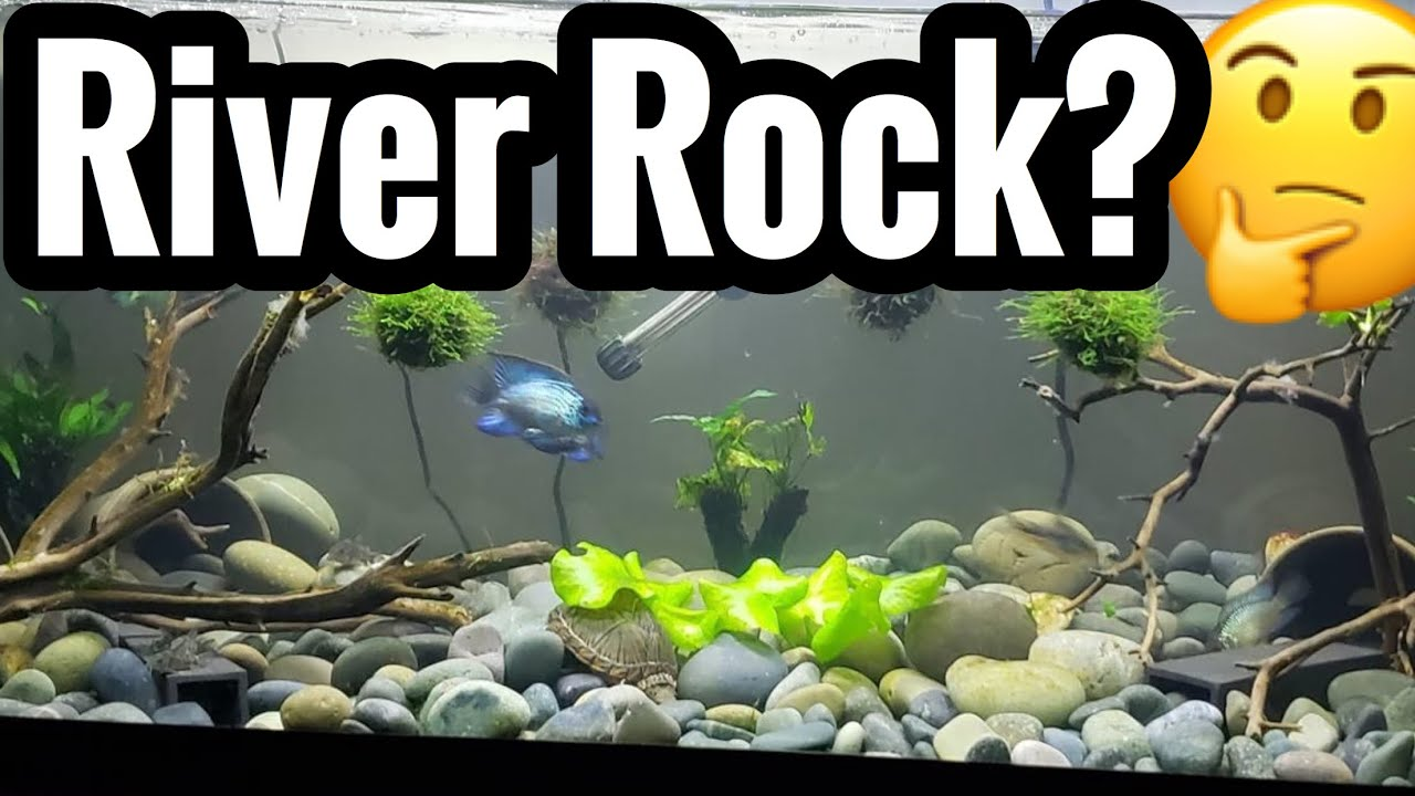 River Rock Large Stone As Aquarium Substrate Youtube