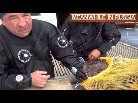 In Russia, Fish Catches You! (Monkfish)