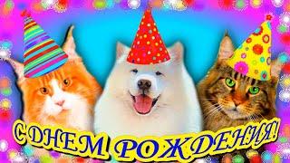 С ДНЕМ РОЖДЕНИЯ! Прикольное поздравление. Смешное поздравление С ДНЕМ РОЖДЕНИЯ! Happy Birthday!